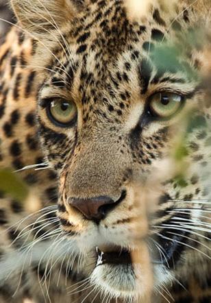 Los Safaris de Chitwa